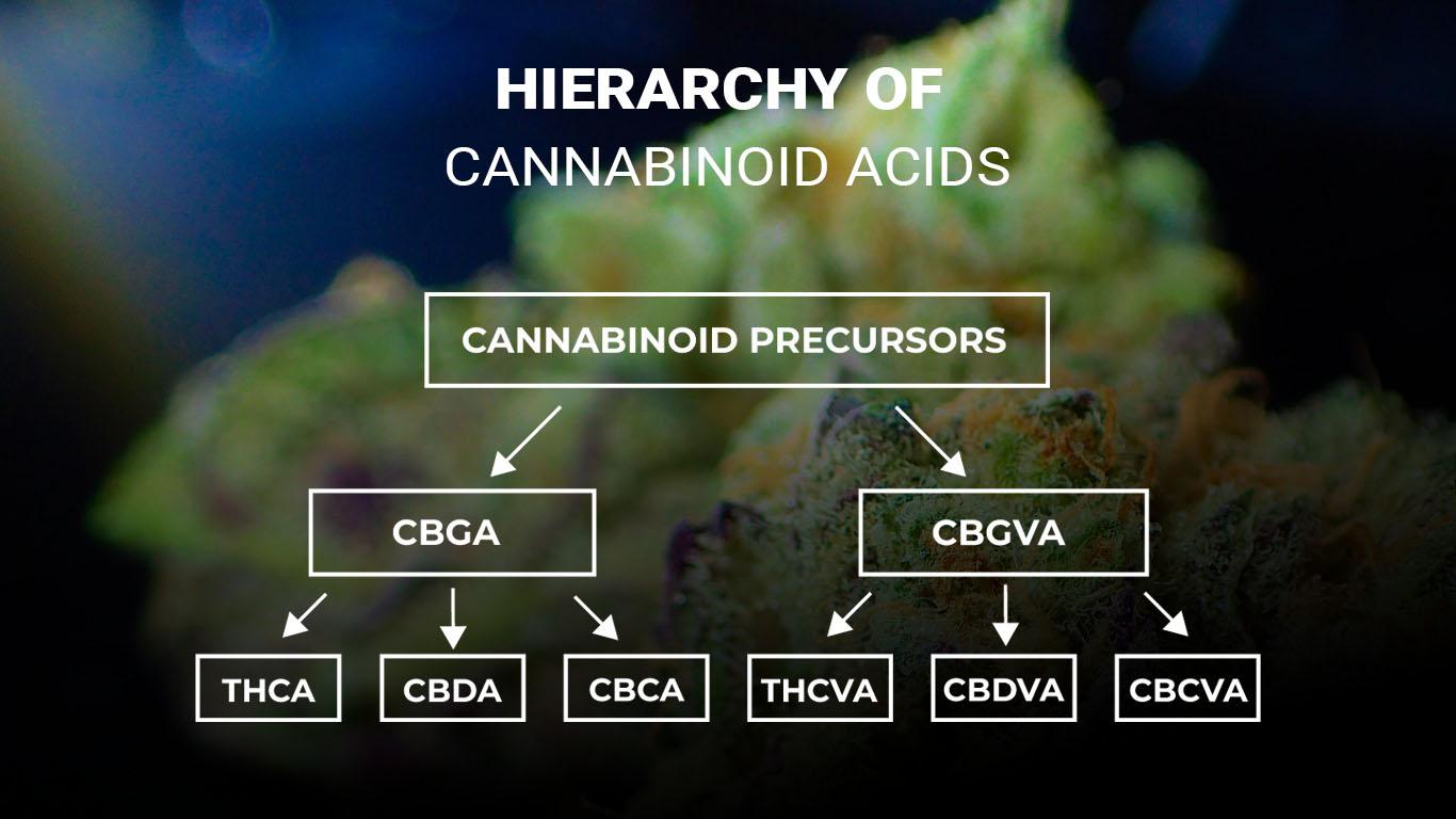 CANNABINOID-ACIDS